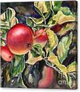 Ripe For The Picking Canvas Print