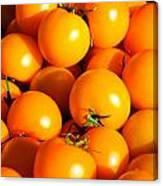 Ripe Yellow Tomatoes Canvas Print
