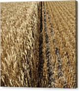 Ripened Wheat And Stubble In Saskatchewan Field Canvas Print
