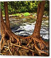 River And Roots Canvas Print