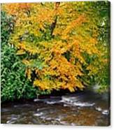 River Camcor In The Fall  Co Offaly Canvas Print