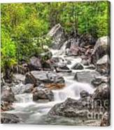 River In The Forest Canvas Print