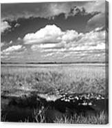 River Of Grass - The Everglades Canvas Print