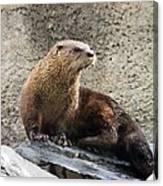 River Otter Canvas Print