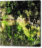 River Through The Trees Canvas Print