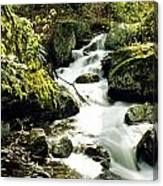 River With Rocks In The Forest Canvas Print