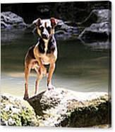 Riverdog Canvas Print