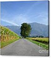 Road And Trees Canvas Print