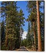 Road Through Lassen Forest Canvas Print