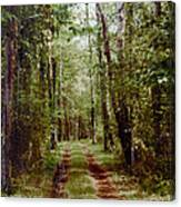 Road To Anywhere Canvas Print
