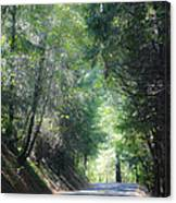Road To Apple Hill Canvas Print
