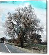 Road To Hico Tx Canvas Print