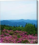 Roan Mountain Canvas Print