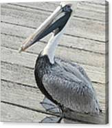 Robbie's Pelican Canvas Print