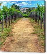 Robert Mondovi Vineyard Path Canvas Print