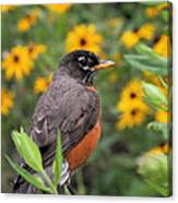 Robin Among Flowers Canvas Print