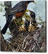Robin And Babies In Nest Canvas Print