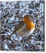 Robin On A Frosty Morning Canvas Print