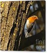 Robin On Tree Canvas Print