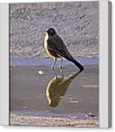 Robin Reflection Canvas Print