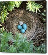 Robins Nest And Cowbird Egg Canvas Print