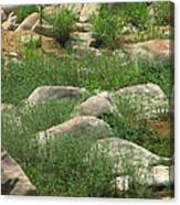 Rocks And Grass At Amidon Conservation Area Missouri Canvas Print