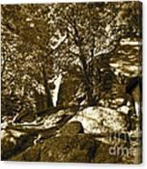 Rocks And Trees 1 Sepia Canvas Print