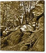 Rocks And Trees 2 Sepia Canvas Print