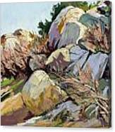 Rocks And Weeds Canvas Print