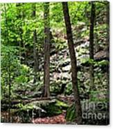 Rocky Forest Of Chatfield Canvas Print