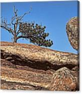 Rocky Tree Canvas Print