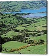 Rolling Fields With Grazing Sheep Canvas Print