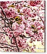 Romantic Cherry Blossoms Canvas Print