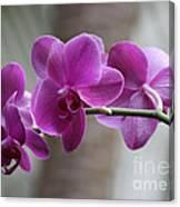 Romantic Purple Orchids Canvas Print