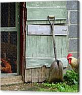 Rooster And Hens Canvas Print