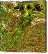 Roots Of A Tree At Ciucaru Mare Forest Canvas Print