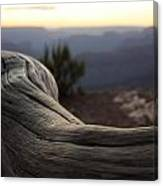 Roots Of The Grand Canyon Canvas Print