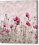 Pink Poppy Field  Canvas Print