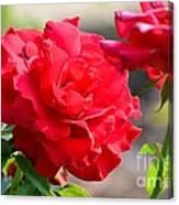 Rosas Roja Canvas Print