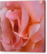 Rose 02 Canvas Print