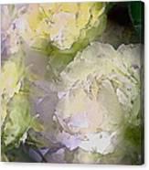 Rose 151 Canvas Print