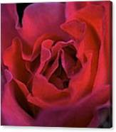 Rose 157 Canvas Print