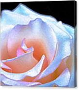 Rose 158 Canvas Print