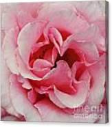 Rose 7 Canvas Print