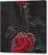 Rose 85 Canvas Print