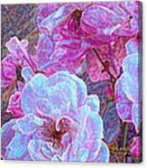 Rose 94 Canvas Print