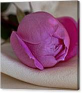 Rose And Silk Canvas Print