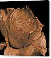 Rose Art  Sepia Canvas Print