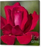 Rose Flower Series 2 Canvas Print