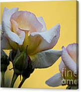 Rose Flower Series 3 Canvas Print